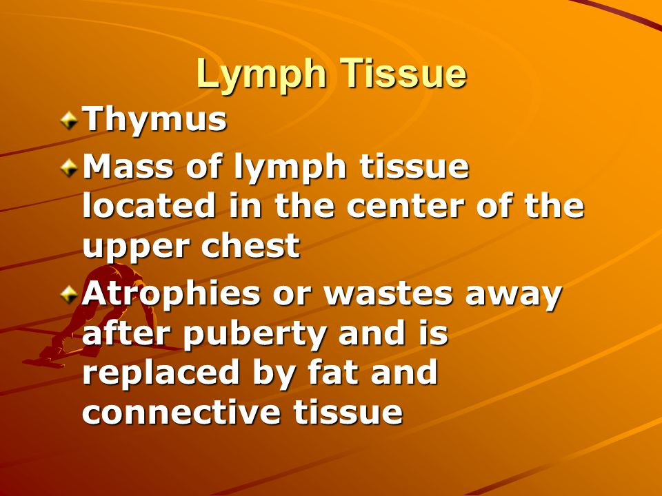 Lymph Tissue Thymus Mass of lymph tissue located in the center of the upper chest Atrophies or wastes away after puberty and is replaced by fat and connective tissue