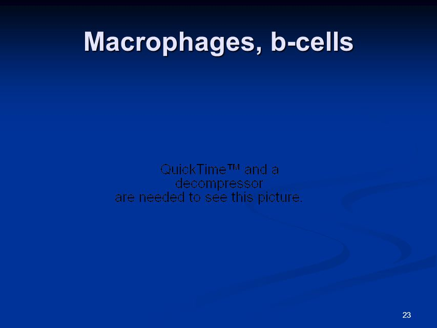 23 Macrophages, b-cells