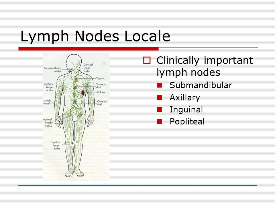 Lymph Nodes Locale  Clinically important lymph nodes Submandibular Axillary Inguinal Popliteal