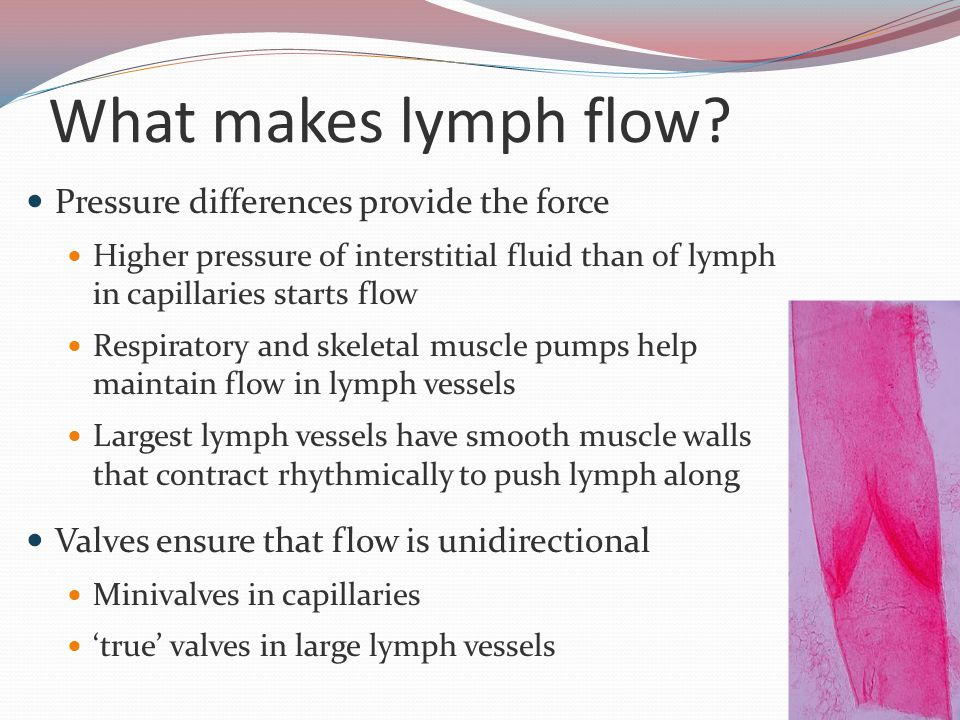 What makes lymph flow.