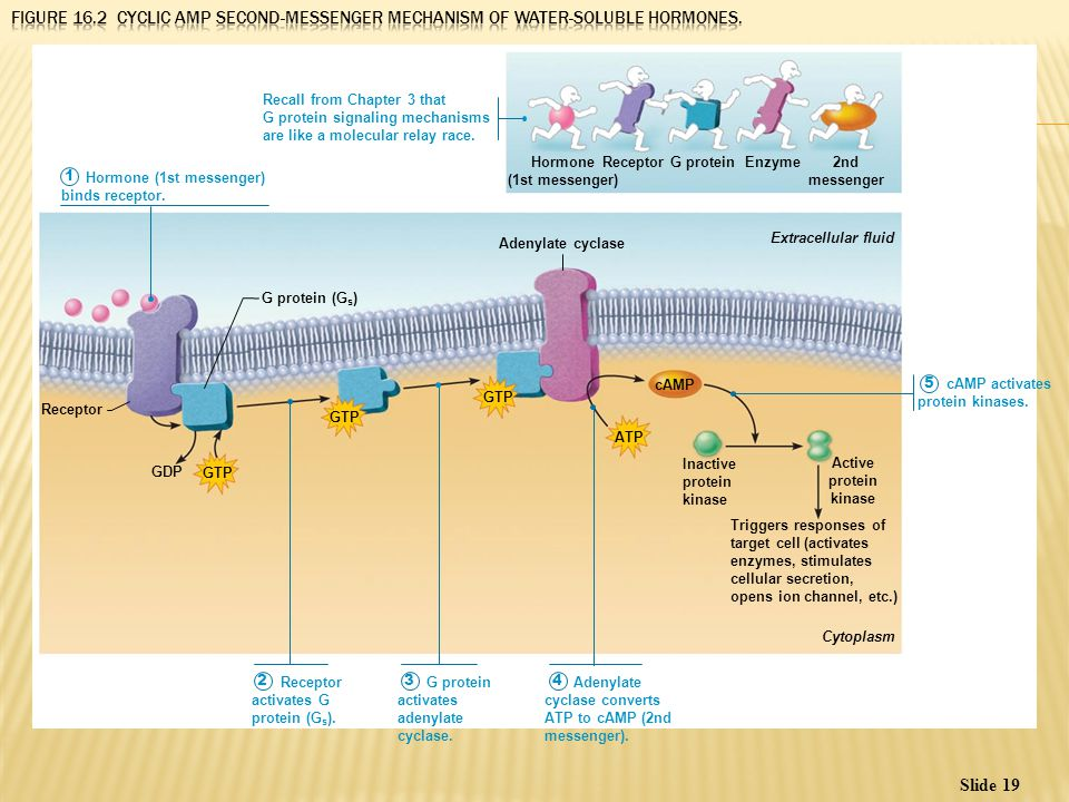 the nervous system ii ion channels
