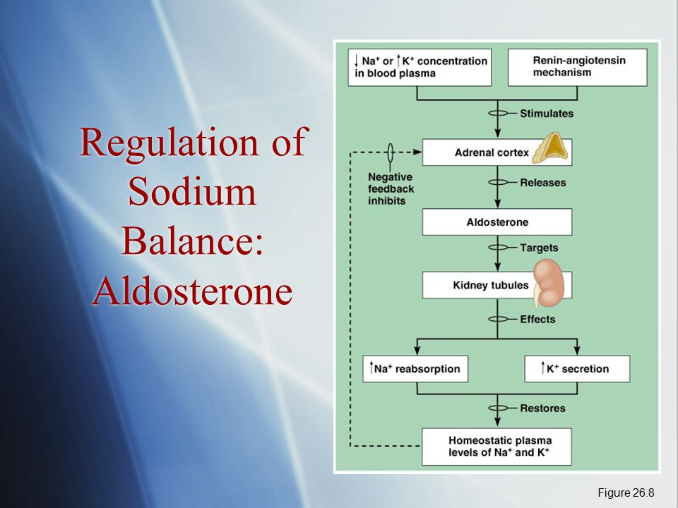 Regulation of Sodium Balance: Aldosterone Figure 26.8