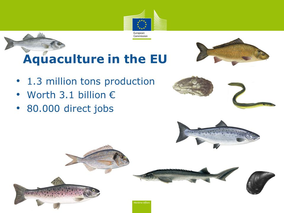 1.3 million tons production Worth 3.1 billion € direct jobs Aquaculture in the EU