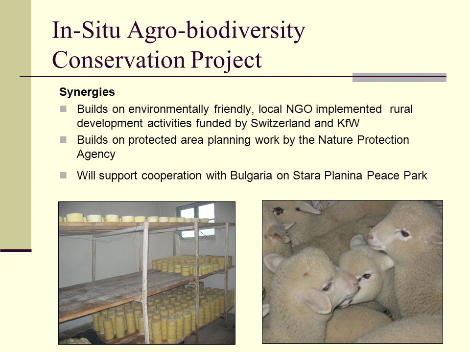 In-Situ Agro-biodiversity Conservation Project Synergies Builds on environmentally friendly, local NGO implemented rural development activities funded by Switzerland and KfW Builds on protected area planning work by the Nature Protection Agency Will support cooperation with Bulgaria on Stara Planina Peace Park