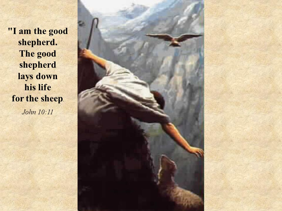 I am the good shepherd. The good shepherd lays down his life for the sheep. John 10:11