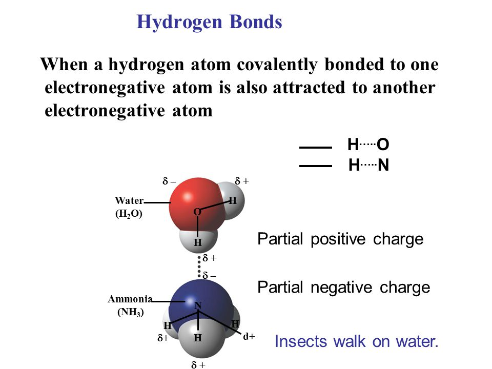 Hydrogen Bonds  – –  + +  + + Water (H 2 O) Ammonia (NH 3 ) O H H  + +  – – N H H H ++ d+d+ When a hydrogen atom covalently bonded to one electronegative atom is also attracted to another electronegative atom Partial positive charge Partial negative charge H …..