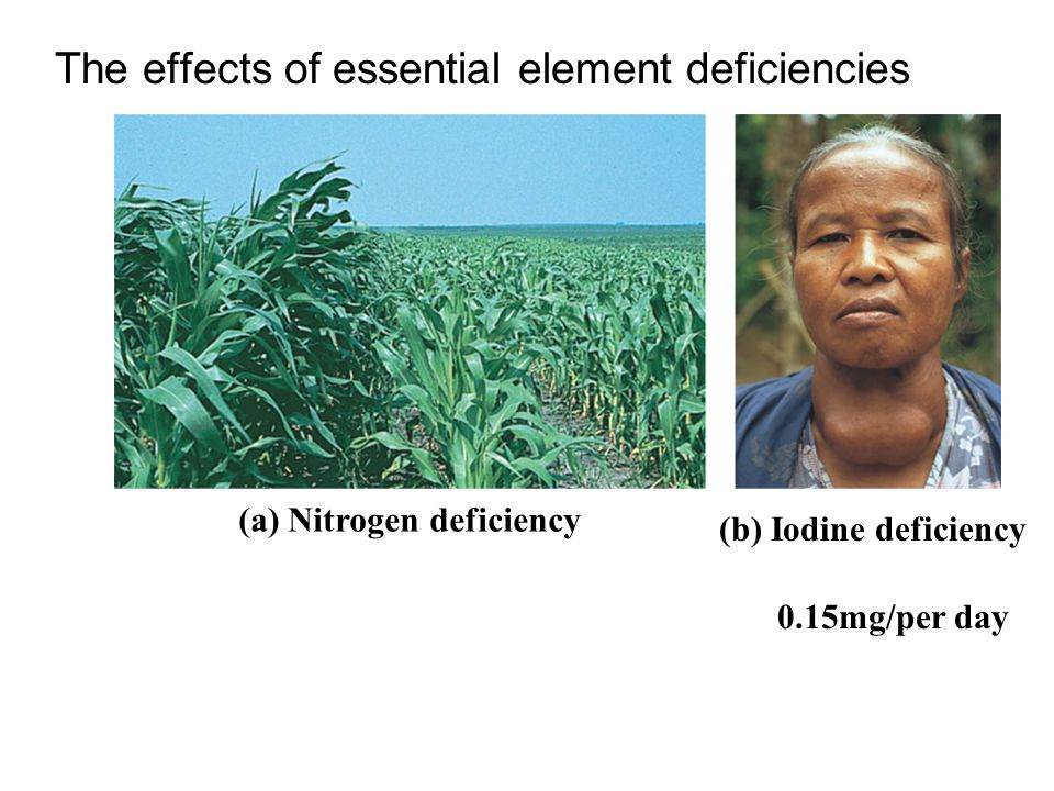 (a) Nitrogen deficiency (b) Iodine deficiency The effects of essential element deficiencies 0.15mg/per day