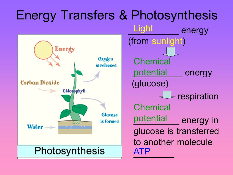 Biochemistry of photosynthesis an introduction photosynthesis 4 energy transfers photosynthesis energy from sunlight energy glucose respiration energy in glucose is transferred to another ccuart Gallery