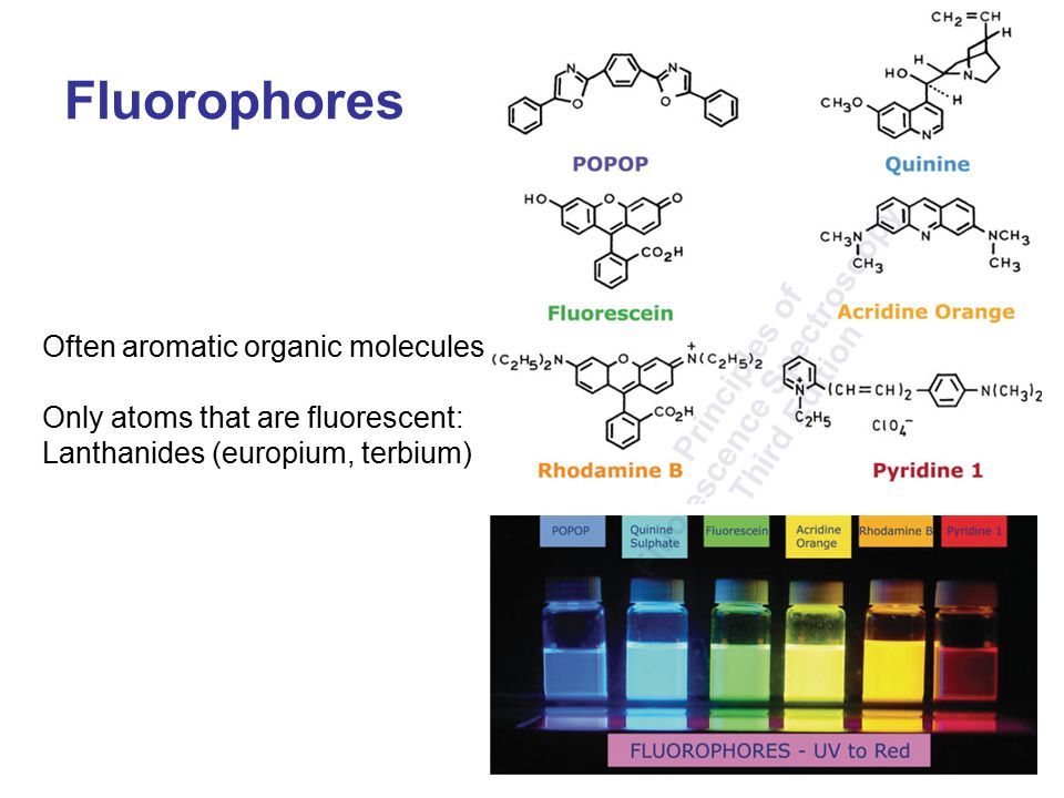 Fluorophores Often aromatic organic molecules Only atoms that are fluorescent: Lanthanides (europium, terbium)