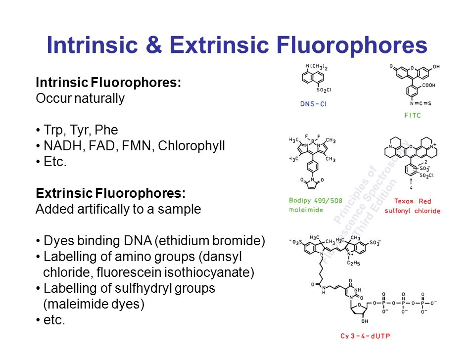 Intrinsic & Extrinsic Fluorophores Intrinsic Fluorophores: Occur naturally Trp, Tyr, Phe NADH, FAD, FMN, Chlorophyll Etc.