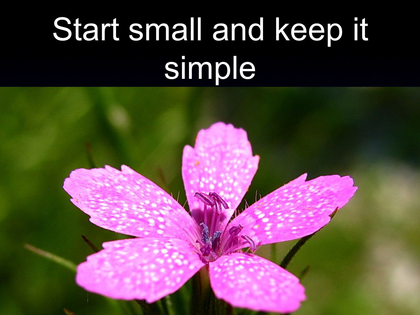 Start small and keep it simple