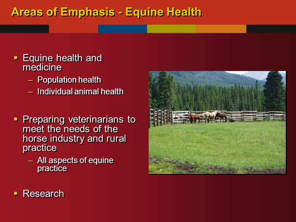 Areas of Emphasis - Equine Health  Equine health and medicine –Population health –Individual animal health  Preparing veterinarians to meet the needs of the horse industry and rural practice –All aspects of equine practice  Research  Equine health and medicine –Population health –Individual animal health  Preparing veterinarians to meet the needs of the horse industry and rural practice –All aspects of equine practice  Research