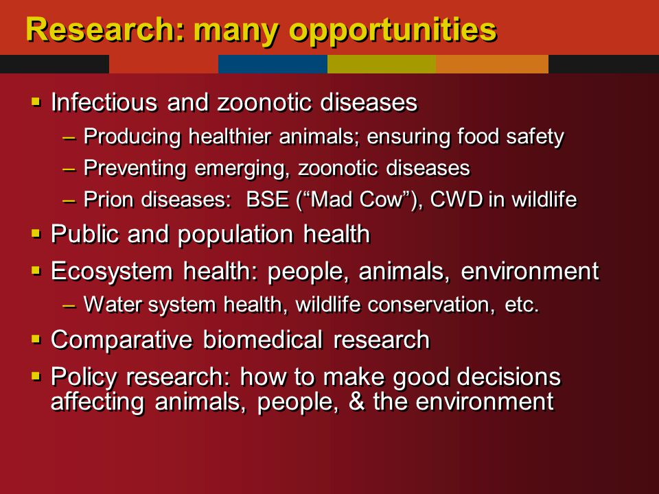 Research: many opportunities  Infectious and zoonotic diseases –Producing healthier animals; ensuring food safety –Preventing emerging, zoonotic diseases –Prion diseases: BSE ( Mad Cow ), CWD in wildlife  Public and population health  Ecosystem health: people, animals, environment –Water system health, wildlife conservation, etc.