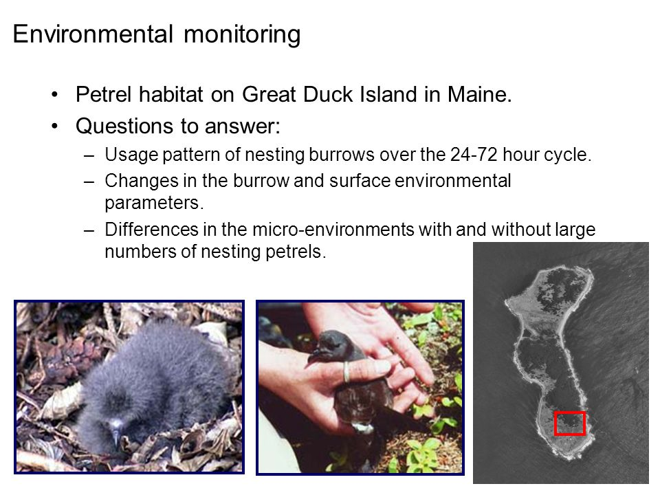 Environmental monitoring Petrel habitat on Great Duck Island in Maine.