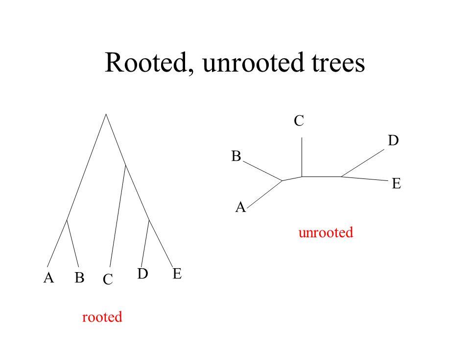 "Presentation ""Tree Reconstruction. Phylogenetic tree Nodes � DNA ..."