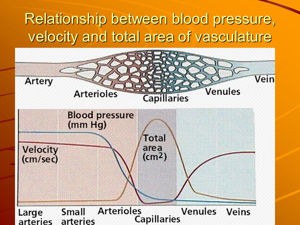 Relationship between blood pressure, velocity and total area of vasculature