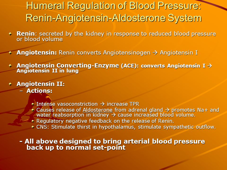 Humeral Regulation of Blood Pressure: Renin-Angiotensin-Aldosterone System Renin: secreted by the kidney in response to reduced blood pressure or blood volume Angiotensin: Renin converts Angiotensinogen  Angiotensin I Angiotensin Converting-Enzyme (ACE): converts Angiotensin I  Angiotensin II in lung Angiotensin II : –Actions: Intense vasoconstriction  increase TPR Causes release of Aldosterone from adrenal gland  promotes Na+ and water reabsorption in kidney  cause increased blood volume.
