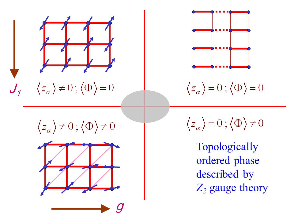 g J1J1 Topologically ordered phase described by Z 2 gauge theory