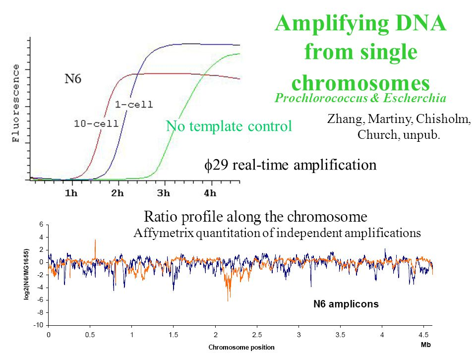 Low cost high accuracy long dna synthesis technology george 20 amplifying dna from single chromosomes 29 real time amplification no template control affymetrix quantitation of independent amplifications pronofoot35fo Choice Image