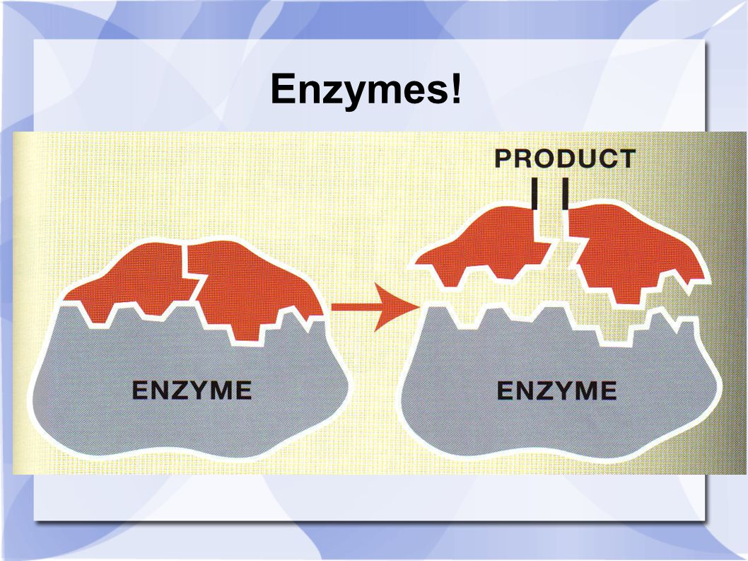 Enzymes!