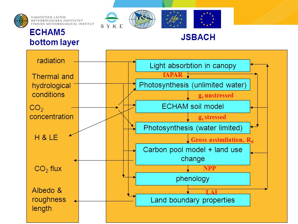03/06/ ECHAM5 bottom layer JSBACH radiation Thermal and hydrological conditions CO 2 concentration H & LE CO 2 flux Albedo & roughness length Light absorbtion in canopy Photosynthesis (unlimited water) ECHAM soil model Photosynthesis (water limited) Carbon pool model + land use change phenology Land boundary properties LAI fAPAR NPP Gross assimilation, R d g c stressed g c unstressed