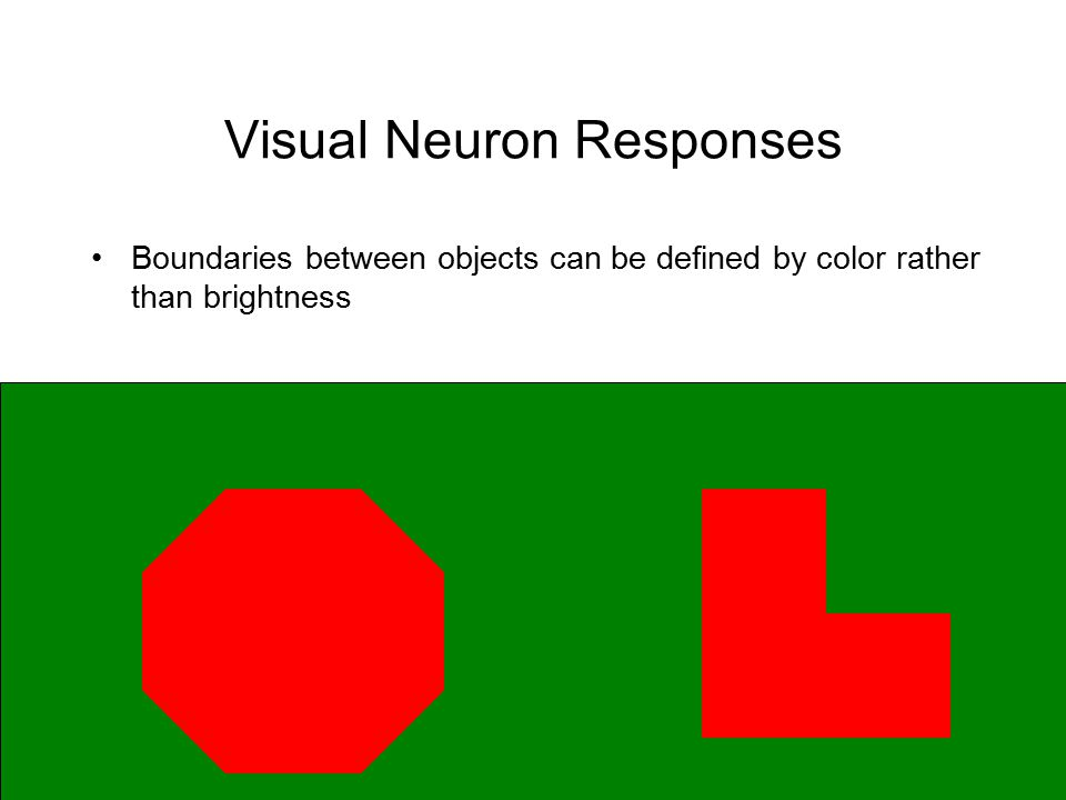 Visual Neuron Responses Boundaries between objects can be defined by color rather than brightness