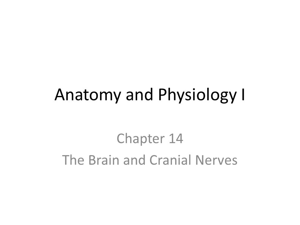 Anatomy and Physiology I Chapter 14 The Brain and Cranial Nerves ...