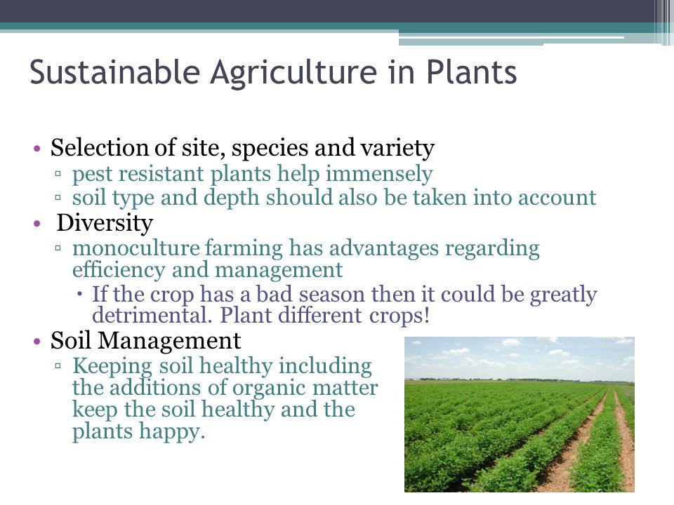 Sustainable Agriculture in Plants Selection of site, species and variety ▫pest resistant plants help immensely ▫soil type and depth should also be taken into account Diversity ▫monoculture farming has advantages regarding efficiency and management  If the crop has a bad season then it could be greatly detrimental.