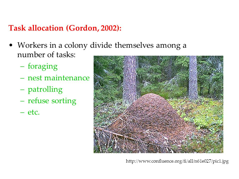 Task allocation (Gordon, 2002): Workers in a colony divide themselves among a number of tasks: –foraging –nest maintenance –patrolling –refuse sorting –etc.