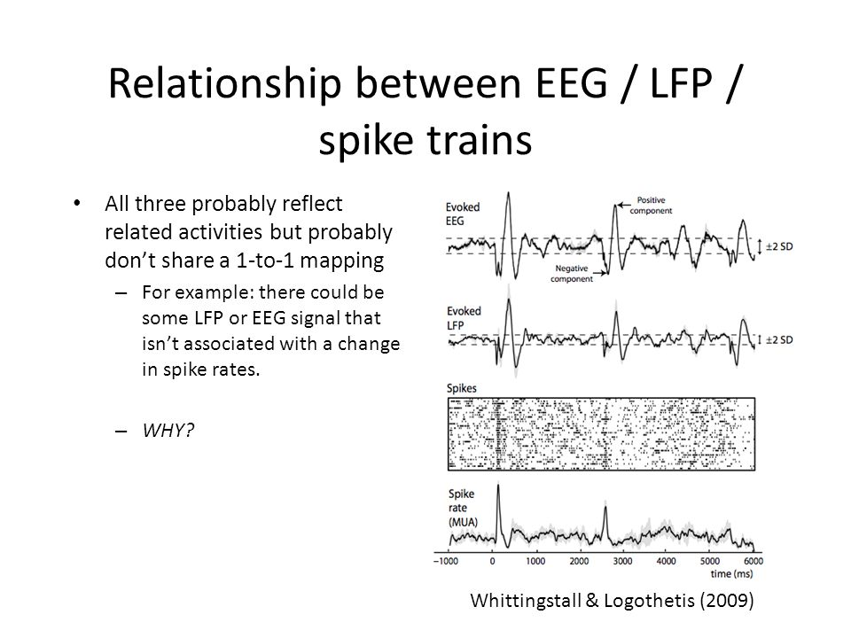 Relationship between EEG / LFP / spike trains All three probably reflect related activities but probably don't share a 1-to-1 mapping – For example: there could be some LFP or EEG signal that isn't associated with a change in spike rates.