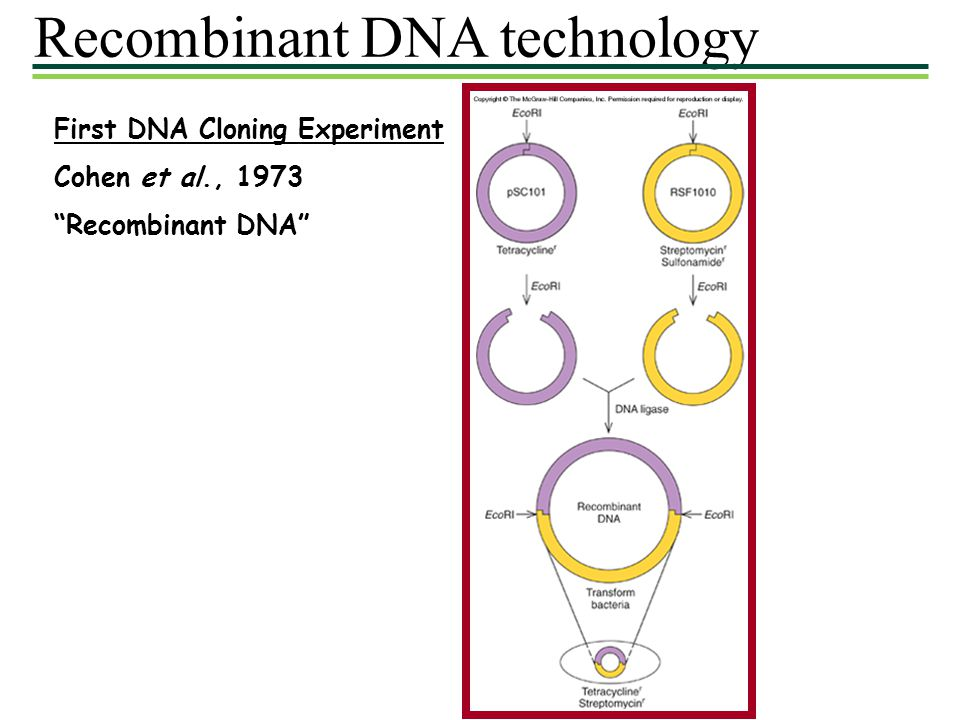 Recombinant Dna Technology Dna Isolated From Two Sources And Cut By