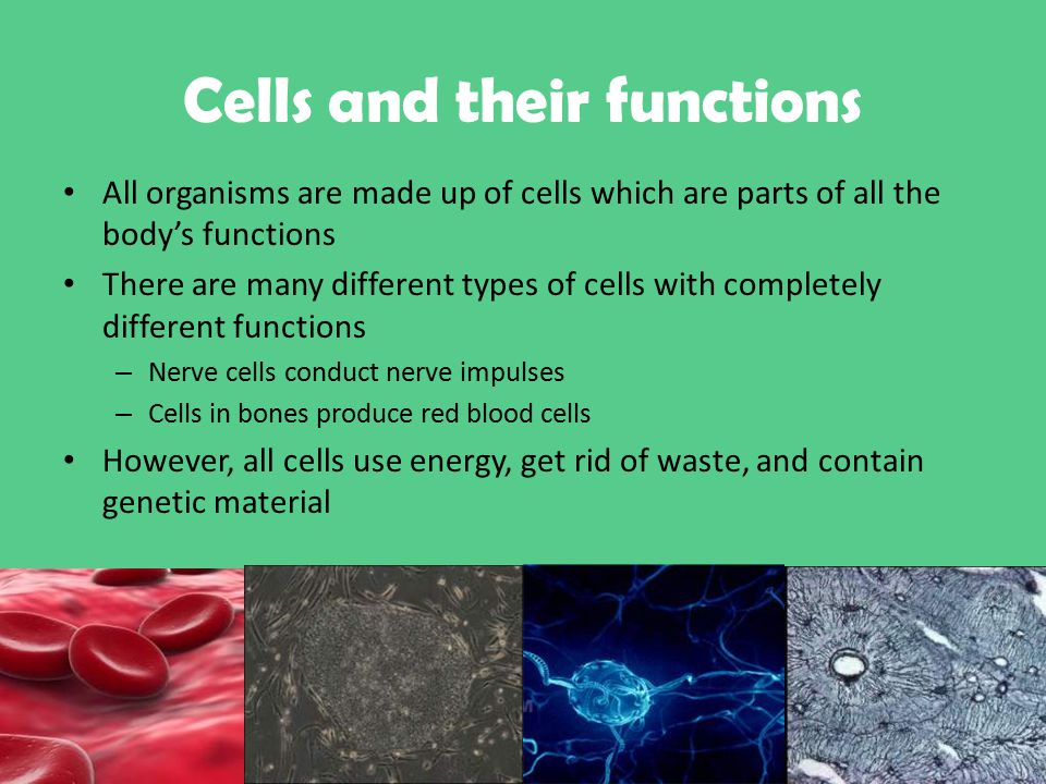 functions of the cells autosaved 1111111111 [autosaved]ppt2343ppt2 - authorstream presentation presentations (ppt, key, pdf.