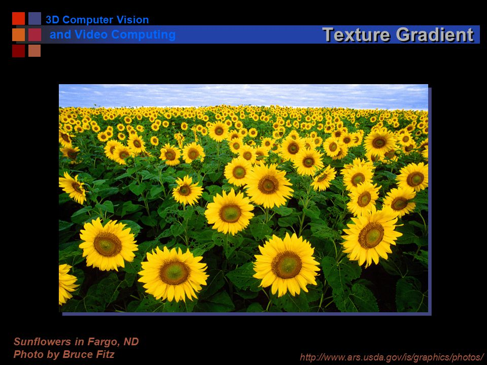 3D Computer Vision and Video Computing Texture Gradient Sunflowers in Fargo, ND Photo by Bruce Fitz