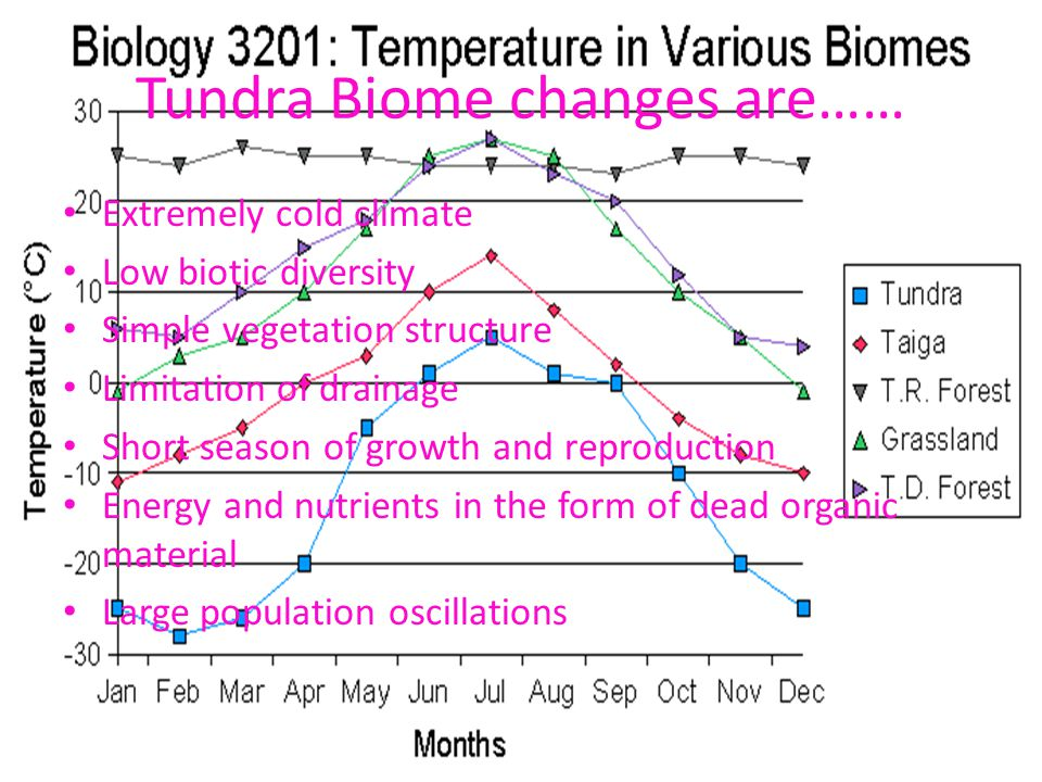 Tundra Biome changes are…… Extremely cold climate Low biotic diversity Simple vegetation structure Limitation of drainage Short season of growth and reproduction Energy and nutrients in the form of dead organic material Large population oscillations