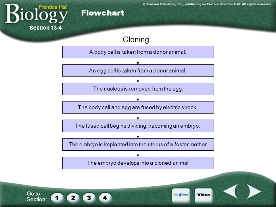 Go to Section: Cloning Section 13-4 Flowchart A body cell is taken from a donor animal.