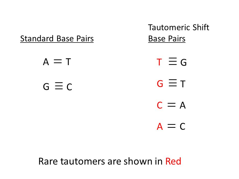 Standard Base Pairs Tautomeric Shift Base Pairs AT G C T G G T AC CA Rare tautomers are shown in Red