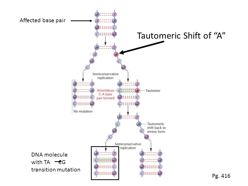 Tautomeric Shift of A DNA molecule with TA CG transition mutation Affected base pair Pg. 416