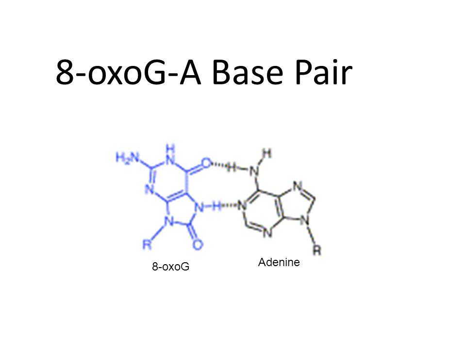 8-oxoG-A Base Pair 8-oxoG Adenine