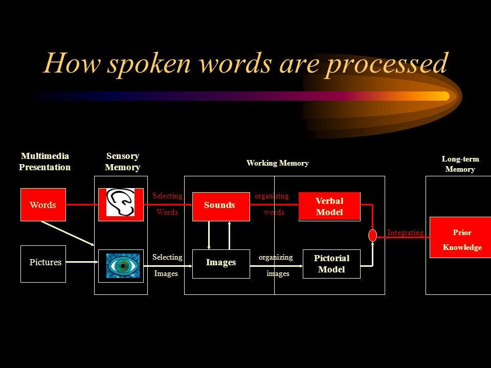 How spoken words are processed Words Pictures Multimedia Presentation Sensory Memory Selecting Words Selecting Images Sounds Images Verbal Model Pictorial Model organizing words organizing images Prior Knowledge Integrating Working Memory Long-term Memory