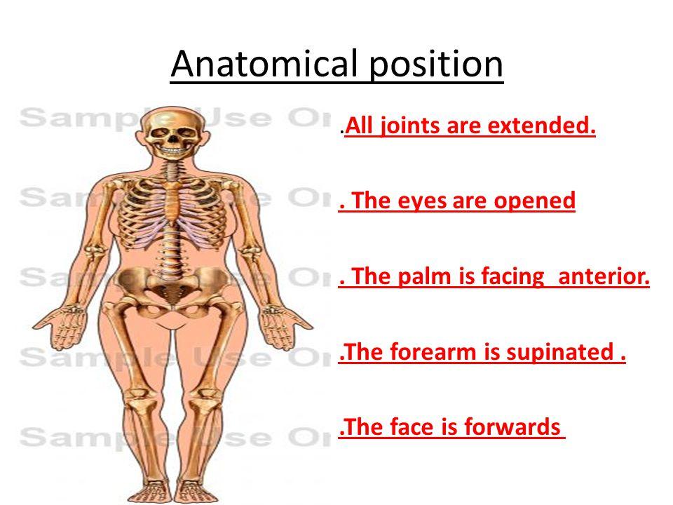 Großzügig Menschliche Anatomie Und Physiologie 11. Auflage Fotos ...