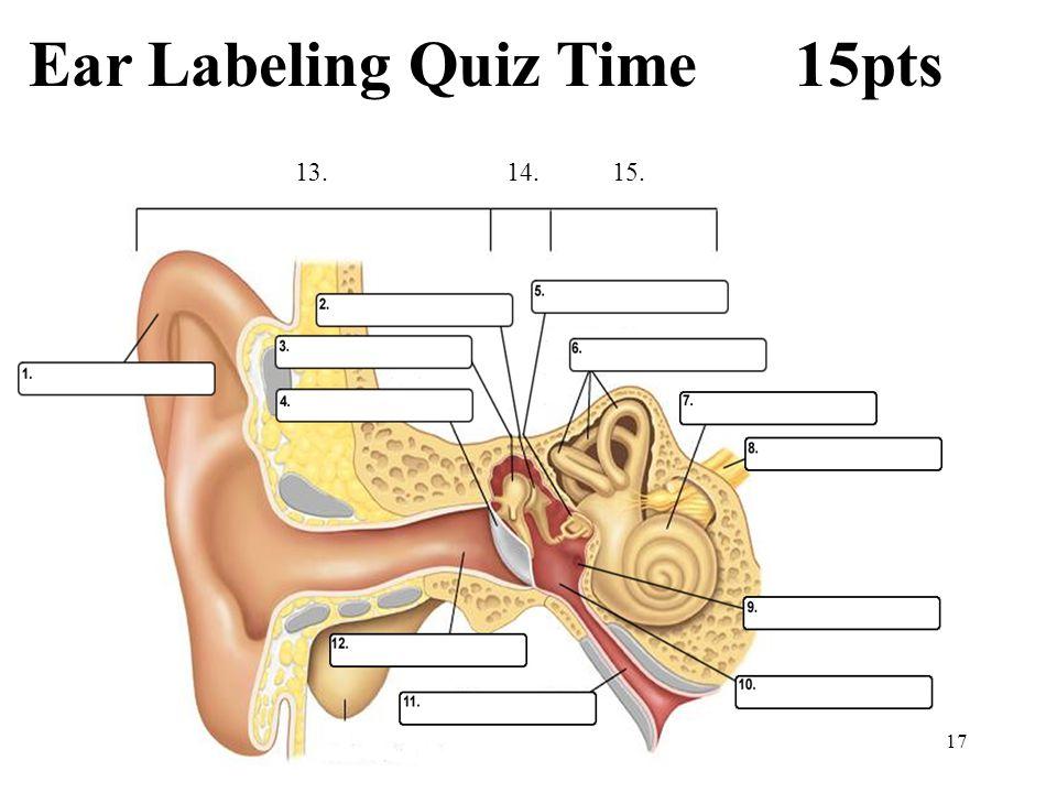 Parts Of The Ear Diagram Quiz - DIY Enthusiasts Wiring Diagrams •