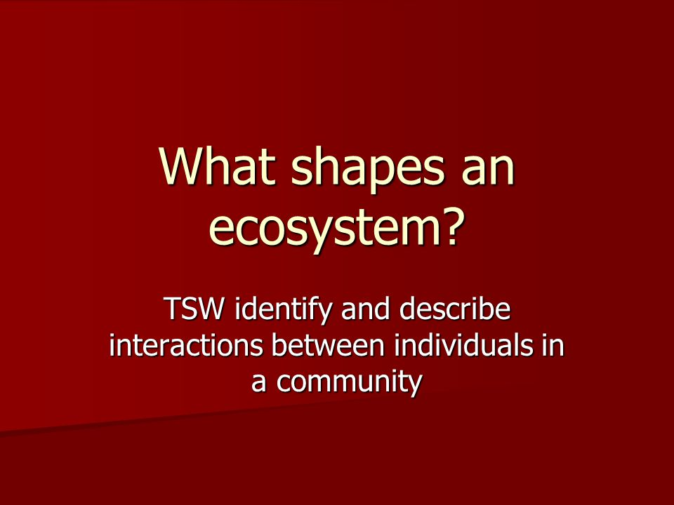 What shapes an ecosystem TSW identify and describe interactions between individuals in a community