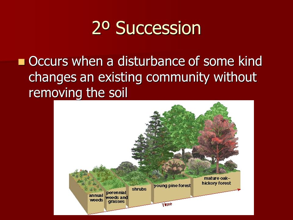 2º Succession Occurs when a disturbance of some kind changes an existing community without removing the soil Occurs when a disturbance of some kind changes an existing community without removing the soil