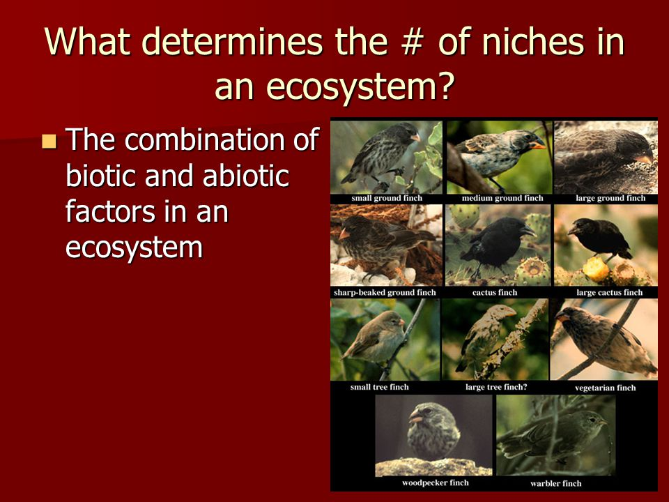 What determines the # of niches in an ecosystem.