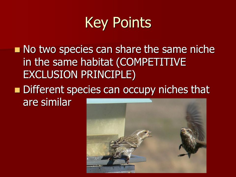 Key Points No two species can share the same niche in the same habitat (COMPETITIVE EXCLUSION PRINCIPLE) No two species can share the same niche in the same habitat (COMPETITIVE EXCLUSION PRINCIPLE) Different species can occupy niches that are similar Different species can occupy niches that are similar