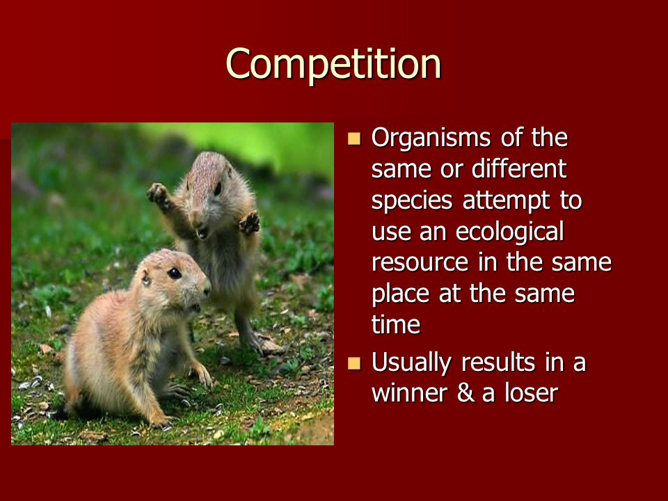 Competition Organisms of the same or different species attempt to use an ecological resource in the same place at the same time Organisms of the same or different species attempt to use an ecological resource in the same place at the same time Usually results in a winner & a loser Usually results in a winner & a loser
