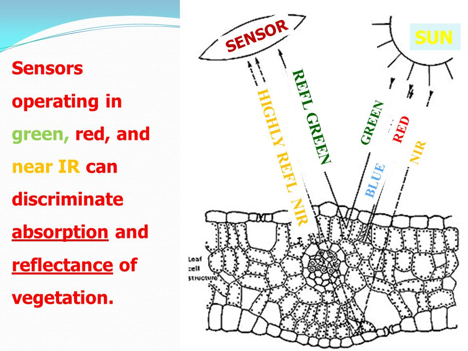 Sensors operating in green, red, and near IR can discriminate absorption and reflectance of vegetation.