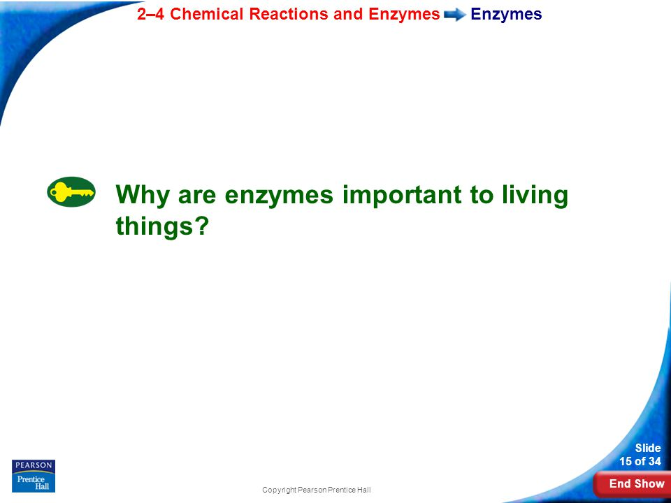 End Show 2–4 Chemical Reactions and Enzymes Slide 15 of 34 Copyright Pearson Prentice Hall Enzymes Why are enzymes important to living things