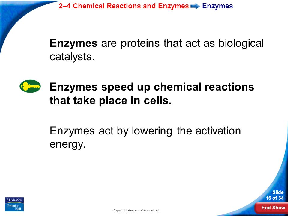 End Show 2–4 Chemical Reactions and Enzymes Slide 16 of 34 Copyright Pearson Prentice Hall Enzymes Enzymes are proteins that act as biological catalysts.