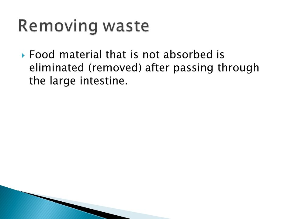  Food material that is not absorbed is eliminated (removed) after passing through the large intestine.